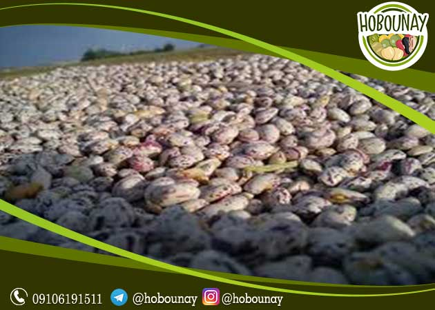 فروش عمده لوبیا کشاورزی