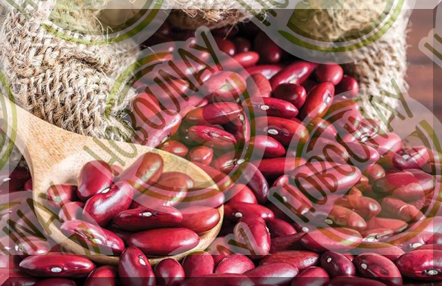 قیمت ویژه لوبیا قرمز 900 گرمی