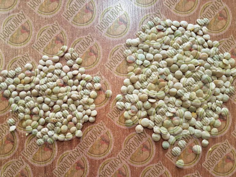 قیمت خرید عدس از کشاورز
